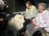 Utrinki iz druženja s psi